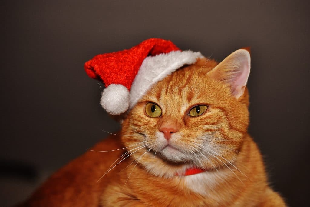 alt-tags on images, cat with Santa hat