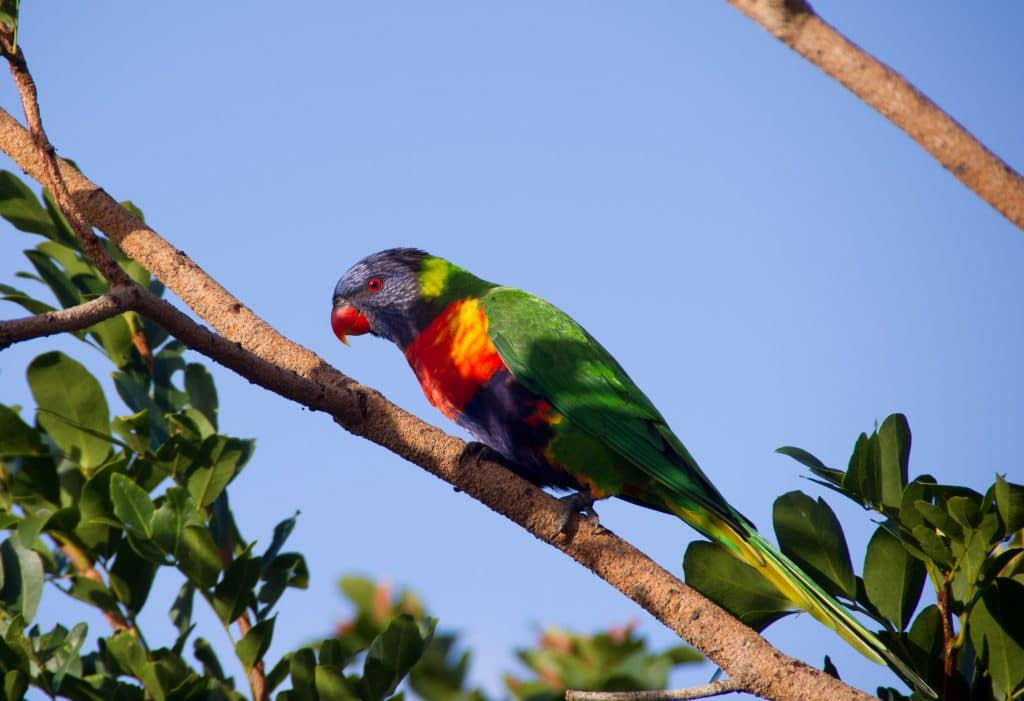 colours seeing, colourful bird example