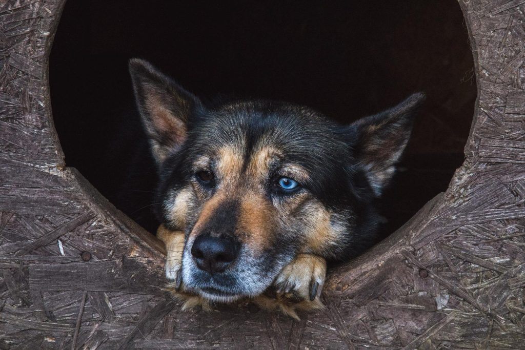 Dog with uncommon eyes